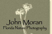John Moran Florida Nature Photography