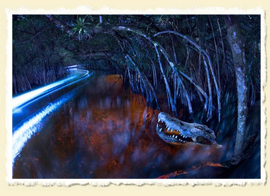 Paddling by Moonlight • The Everglades